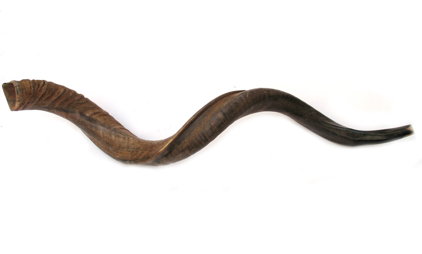 Jumbo Yemenite Natural Shofars