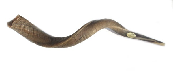 Large Yemenite Natural Shofars