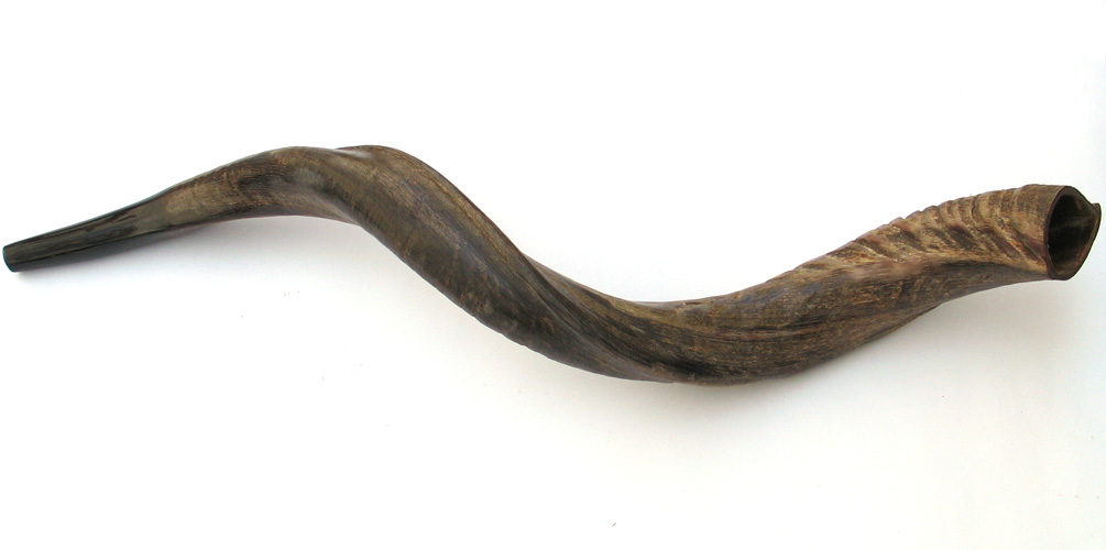 Medium Yemenite Shofars – Natural