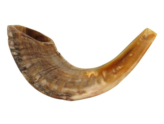 Medium Rams Horn Shofars - Natural