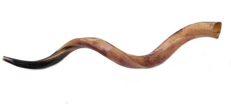 Jumbo Yemenite Polished Shofars