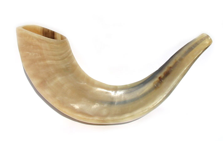 Small Rams Horn Shofars – Polished