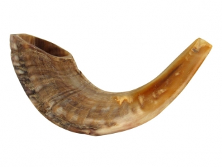 Rams Horn Shofar
