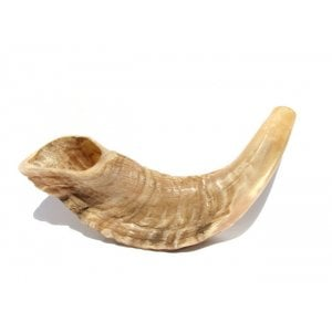 Small Rams Horn Shofar Natural Finish