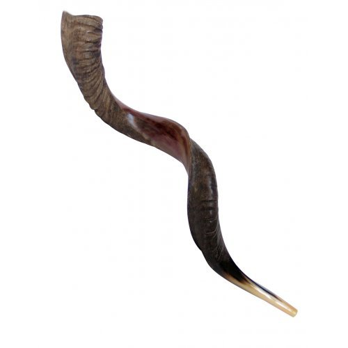 Extra Large Yemenite Kudu Shofar - Half Polished Half Natural