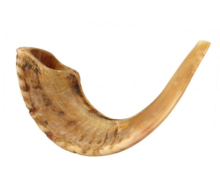 large rams horn shofar natural. Black Bedroom Furniture Sets. Home Design Ideas
