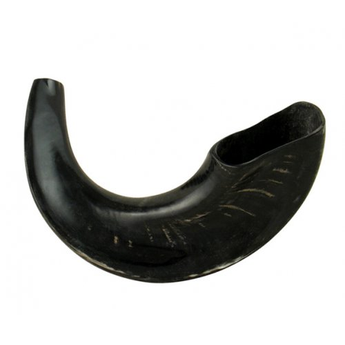 Medium Black Rams Horn Shofar - Polished