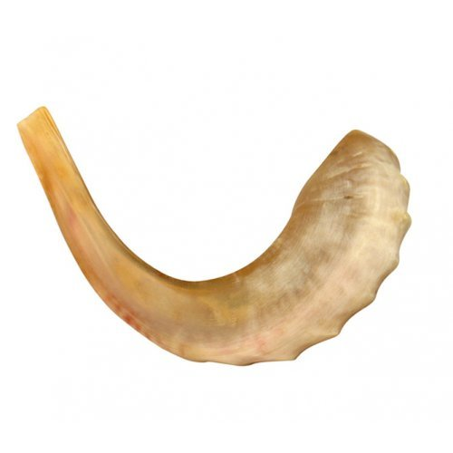 Medium Rams Horn Shofar - Polished