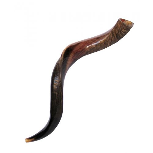 Medium Yemenite Kudu Shofar - Half Polished Half Natural