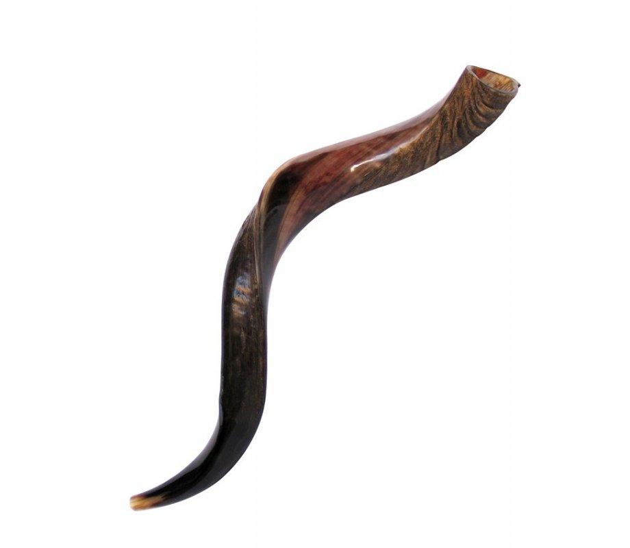 Medium yemenite shofar half polished half natural for Salon yemenite