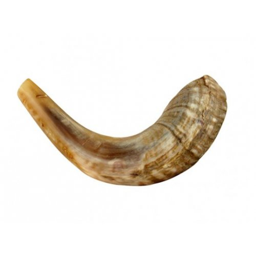 Small Ram's Horn Shofar for Kids - Light Colors